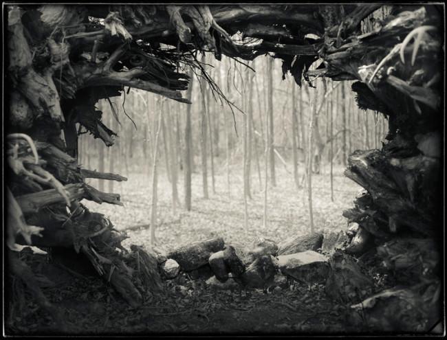 Root Garden_Brian Gaberman