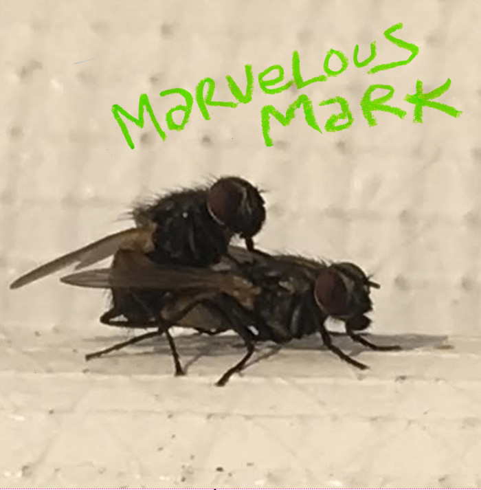 Marvelous Mark 'Buzzin'