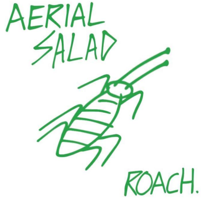 Aerial Salad 'Roach'